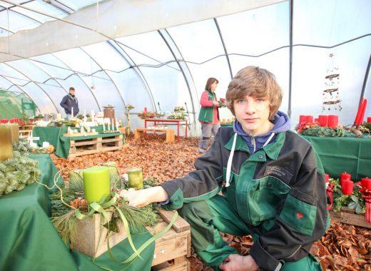 Foto: Freiwilliger Mitarbeiter in der Gärtnerei mit Adventsdekoration
