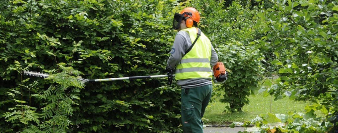 Foto: Garten- und Landschaftspfleger schneidet Büsche
