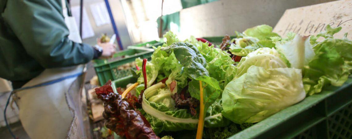 Foto: Kiste mit verschiedenen Salaten